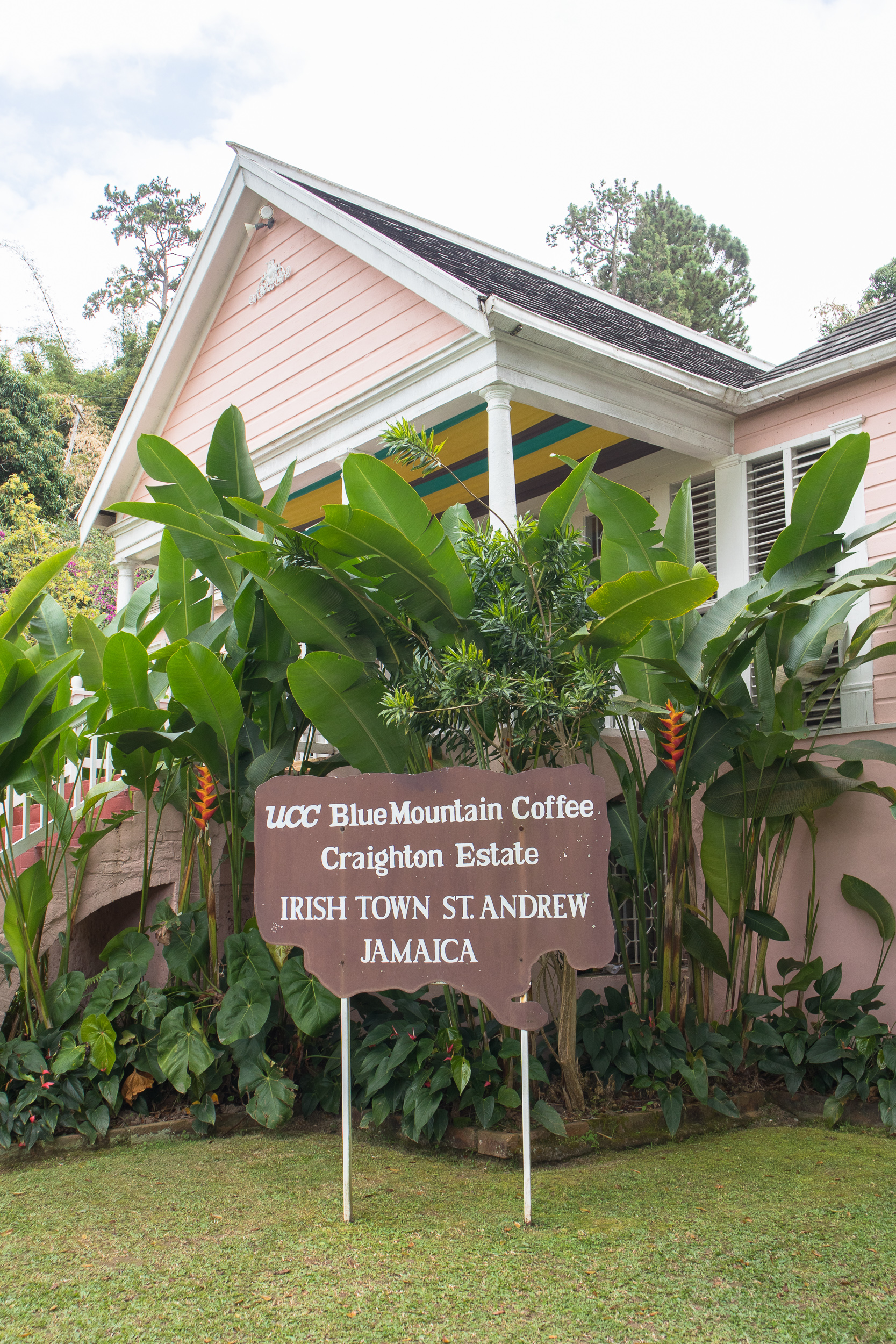 Craighton Estate Blue Mountain Coffee Tour Irish Town - Dreaming about a beach holiday in Jamaica? Travel blogger Kristabel Plummer reveals why you should spend some time in t
